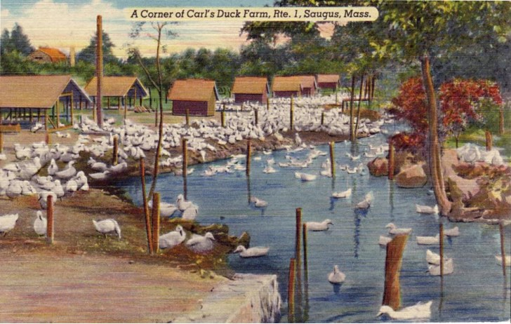 A painting of Carl's Duck Farm