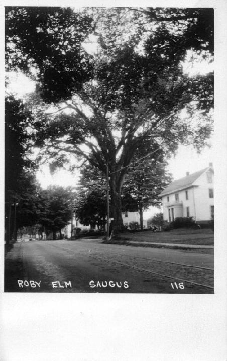 The Roby Elm